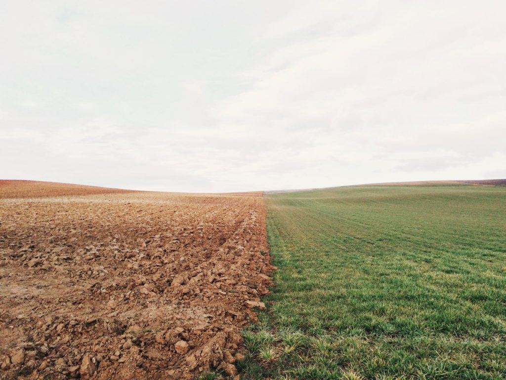 Field with ploughed land on the left half and grass on the right half